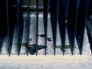 積層住宅の下のセスジシミ
