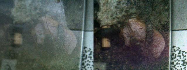 偏光フィルターの効果 フィルターなし(左)とフィルターあり(右)